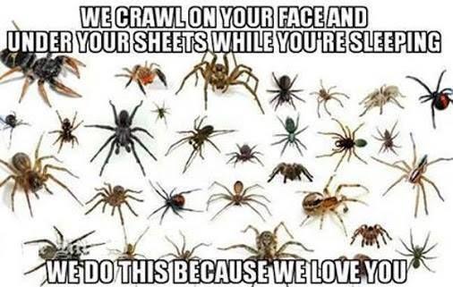 Spiders love you meme - http://jokideo.com/spiders-love-you-meme/