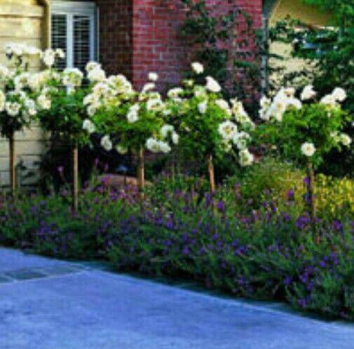 Best Front Garden Ideas Images On Pinterest Garden Ideas