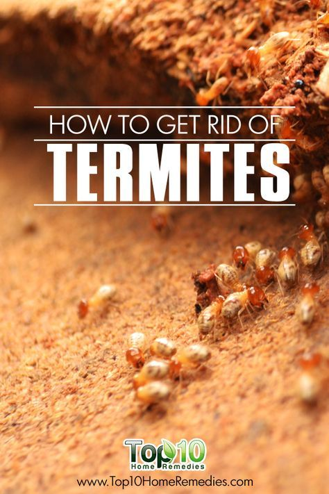 35 best Pest control images on Pinterest | Gardening, Pest ...