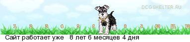 В Белгороде 18 апреля пройдет выставка бездомных собак
