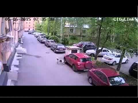 В Петрозаводске стая бродячих собак обгрызла автомобиль