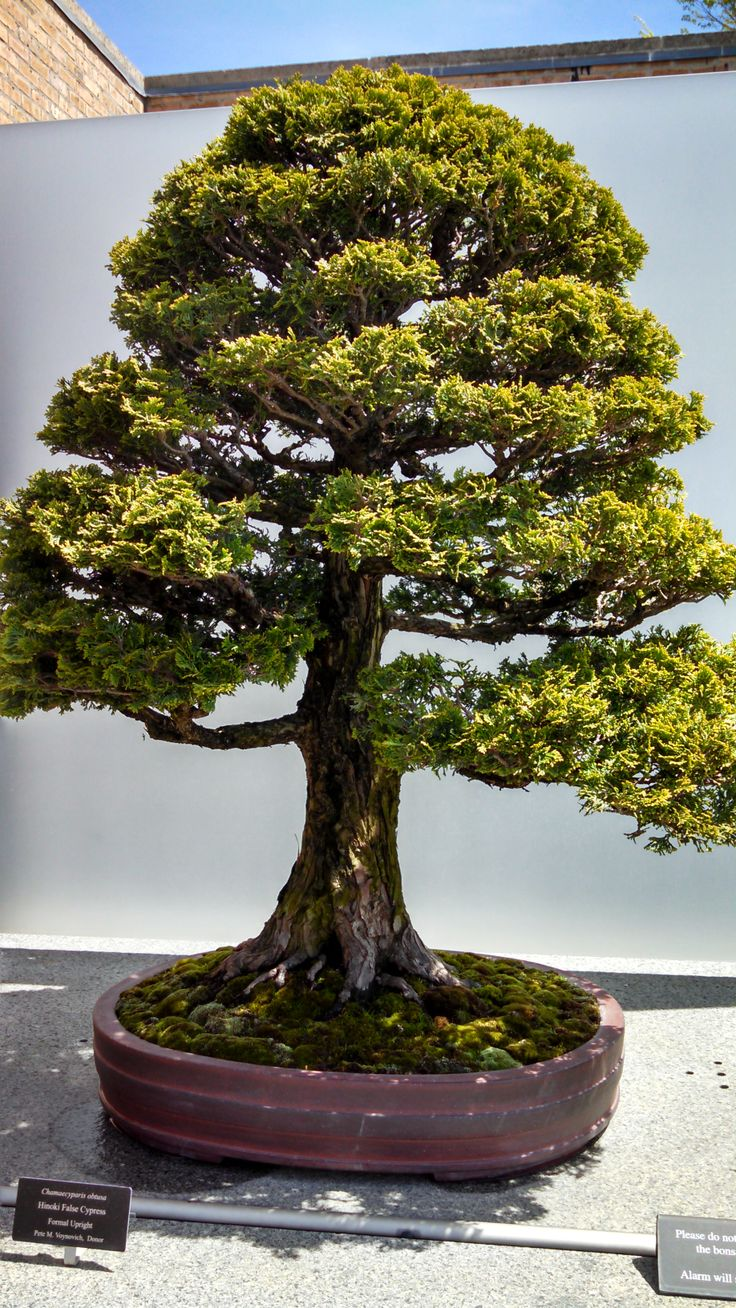 1000 Images About Bonsai Learn On Pinterest