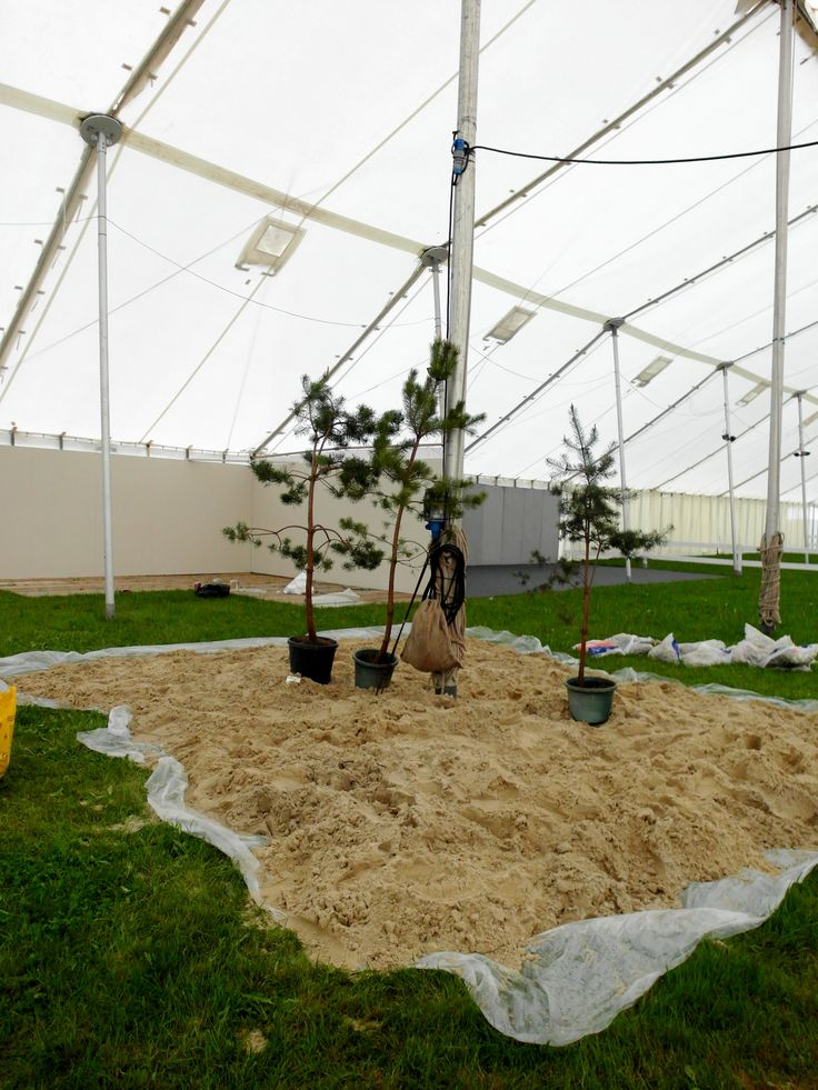 Day 3 The Scots Pine forest arrives...looking a bit dwarfed suddenly by Devon County Show's biggest ever marquee!