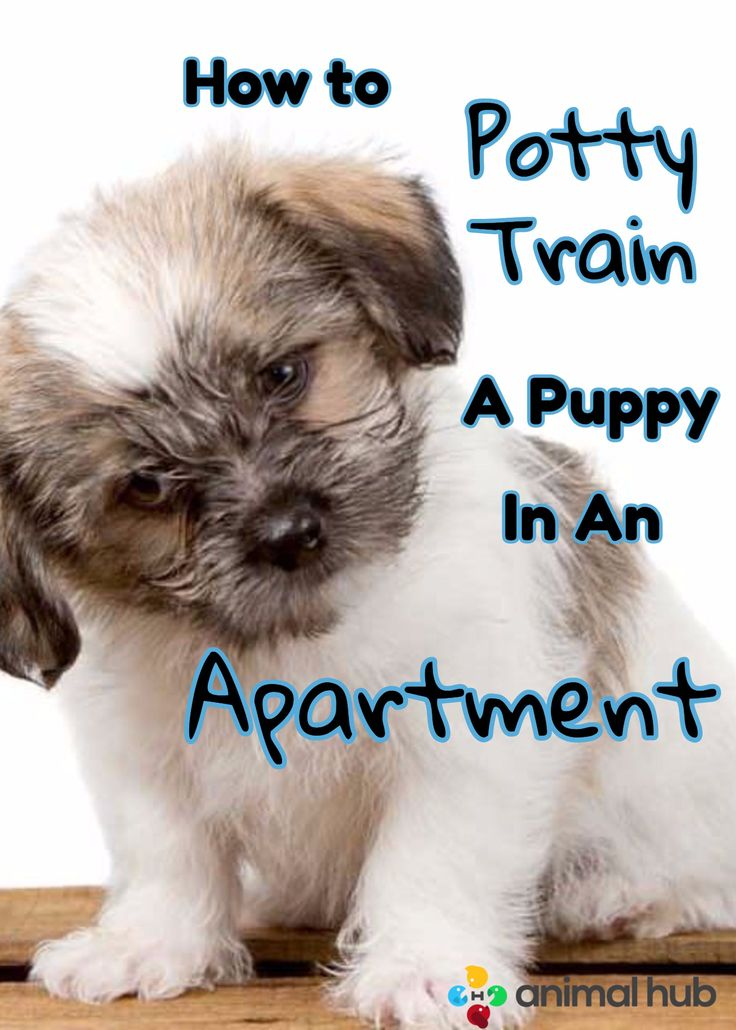 How To Potty Train A Puppy In An Apartment | Animal Hub https://www.animalhub.com/how-to-potty-train-puppy-apartment/ #puppies #dogs #dogtraining