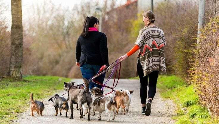 Ask a Dog Walker How Much Do Dog Walkers Get Paid? Dog