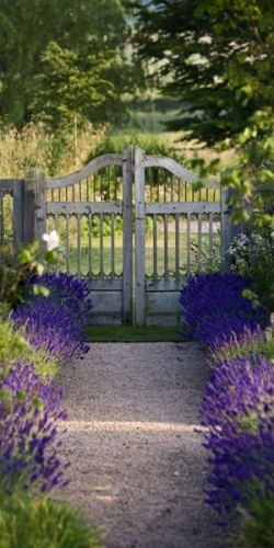 drifts of salvia, lovely border... ahh want this in my new yard now!