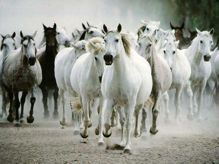 Beautiful Wild Horses Running Animal Picture HD Wallpaper