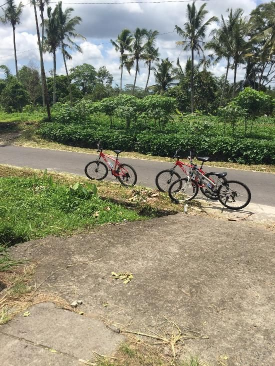 Celebrity Cycling Tour Bali, Ubud: See 380 reviews, articles, and 246 photos
