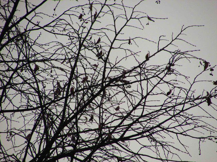 Strom je našim sprievodcom bytia na Zemi. Majme k nemu lásku takú akú máme k sebe samému...