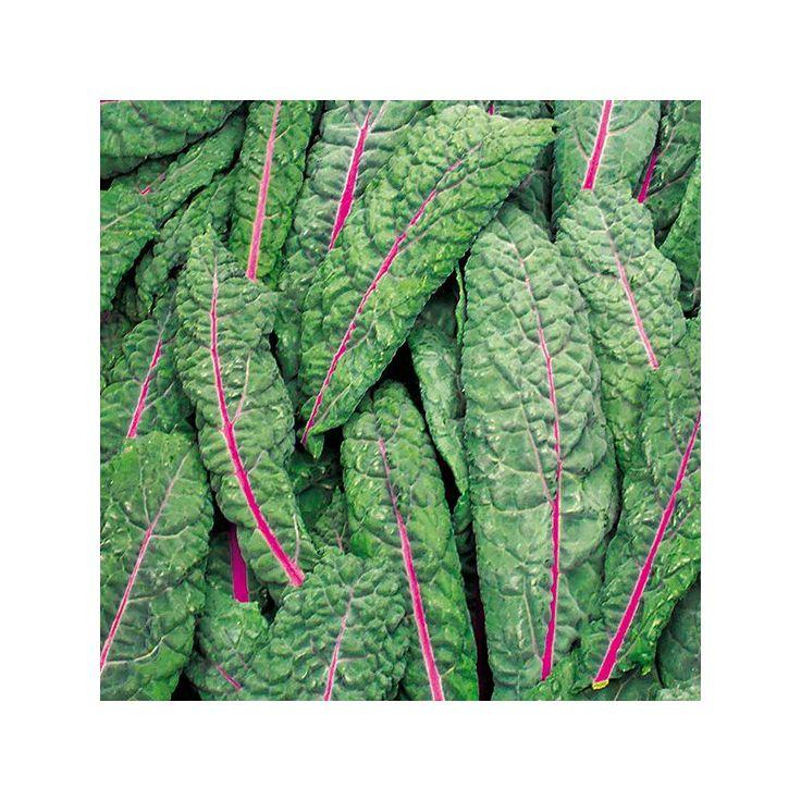 Epingle Sur Choux Kale
