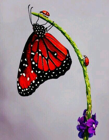 Butterfly & ladiebugs