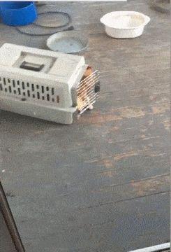 Gatos... Definitivamente algún día dominarán el mundo...