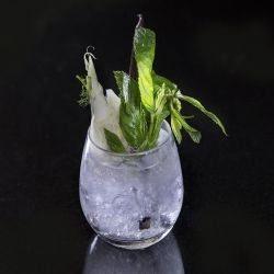 Compressed fennel gin, vanilla and lemon balm tonic by Paul Welburn {cocktail recipe}