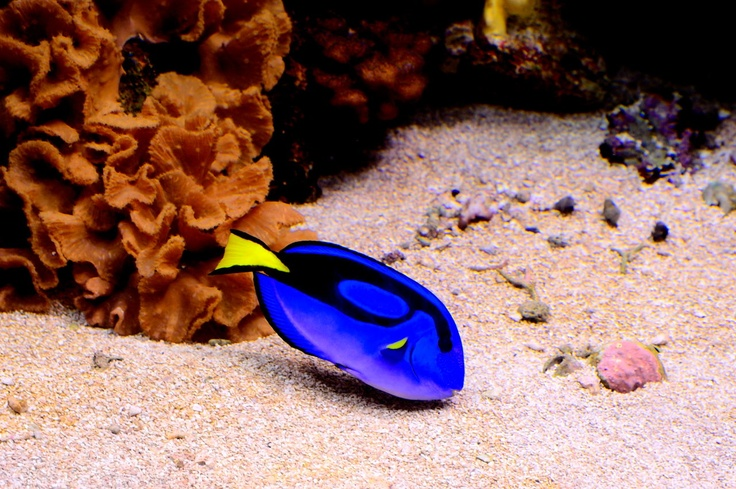 83 best under the sea images on pinterest under the sea for Jims exotic fish