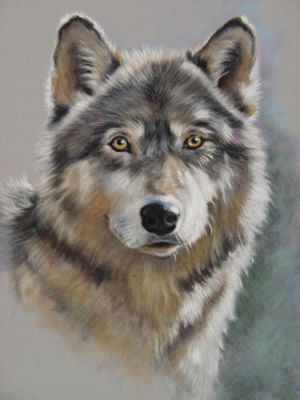 wolf study                                                                                                                                                                                 More
