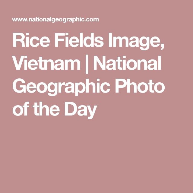 Rice Fields Image, Vietnam |National Geographic Photo of the Day