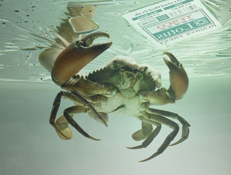 Tesco: Crab   Ads of the World™