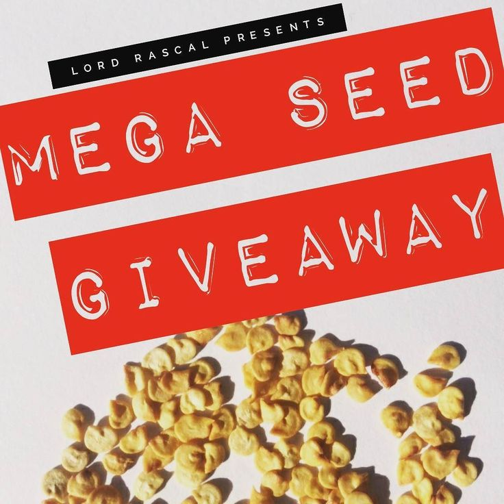 """FREE CHILI SEED GIVEAWAY"" 10 lucky people will receive a packet of 10 x Chilli seeds. . All you need to do is tag 5 friends and DM me your email address. I will email the winners and organise postage anywhere in the world. . RULES - 1 entry per person. I will mail the seeds directly to you anywhere in the world. 10 winners. Seeds are a hot mystery. 10 seeds in total."