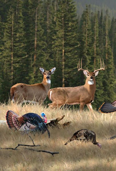 Deer amp Turkey Painting Whitetail deer pictures Wildlife
