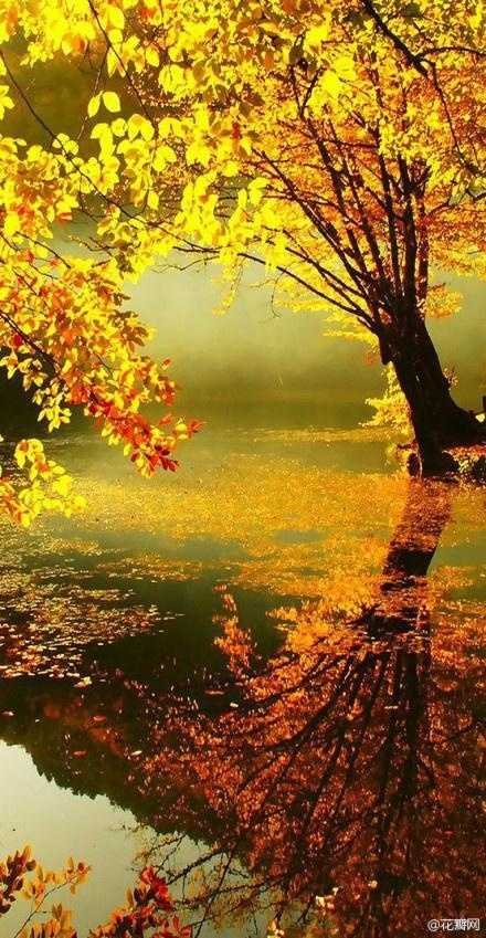 Golden leaves in Fall!! my favorite
