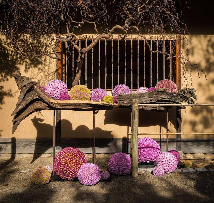 Philippe Bas • Florale Passie