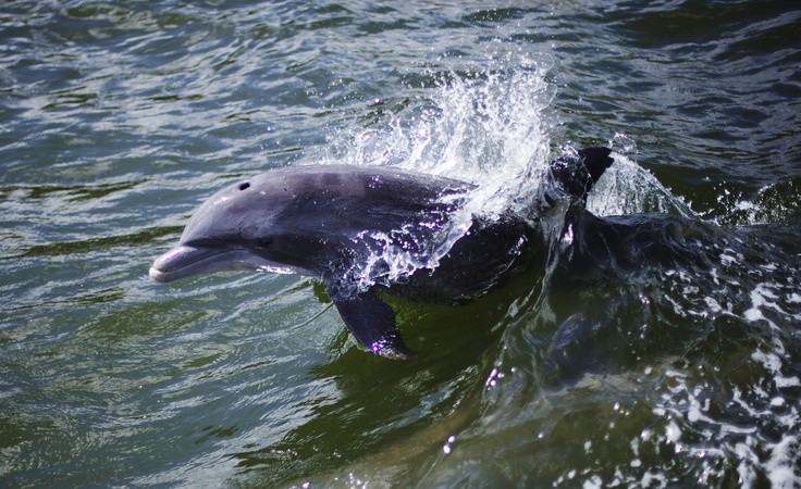 #dolphin Taken in Florida, USA