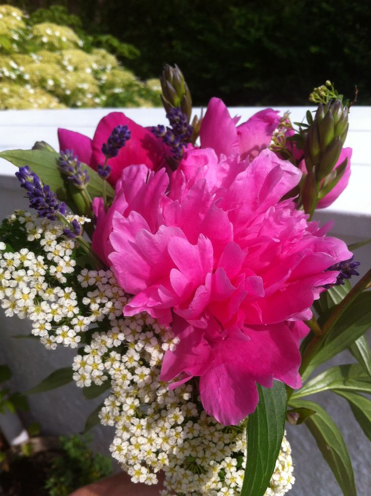 Flowers from my garden :-)