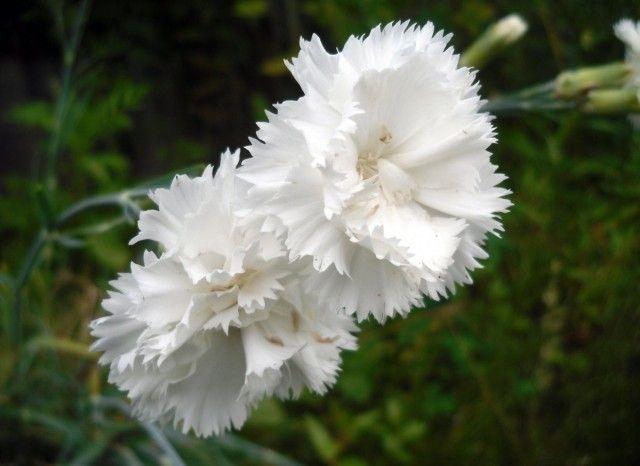 5 цветочных культур, которые сеют на рассаду в феврале 0