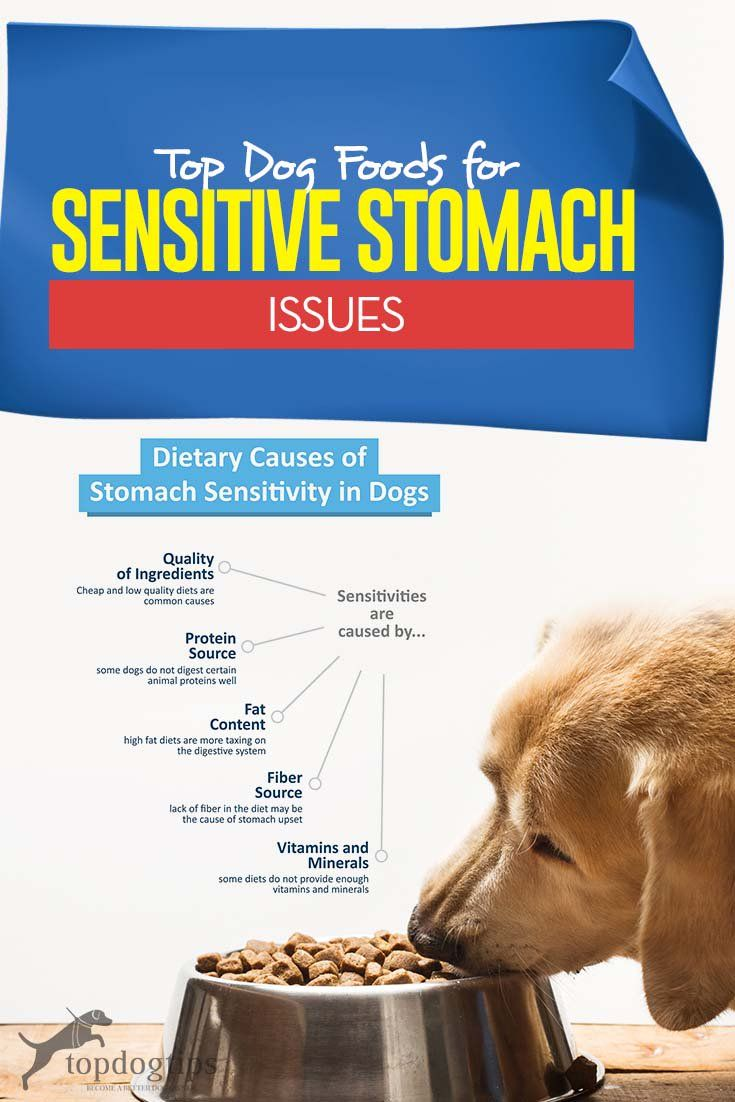 The Best Dog Food For Dogs With Sensitive Stomachs Dog Food