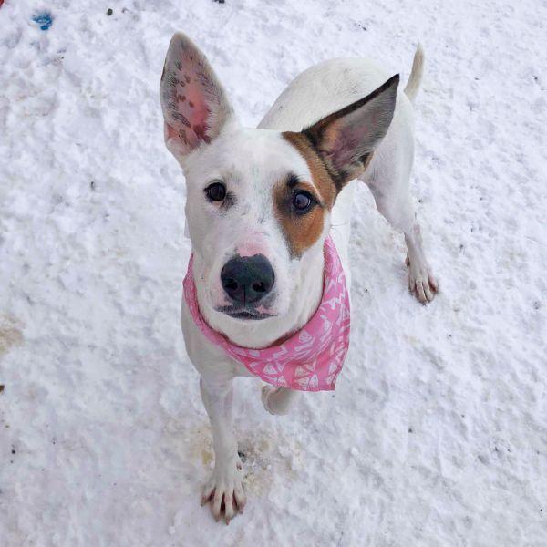 Dogs For Adoption Near Fort Saskatchewan Ab Petfinder In 2020 Dog Adoption Pet Adoption Shepherd Dog Mix
