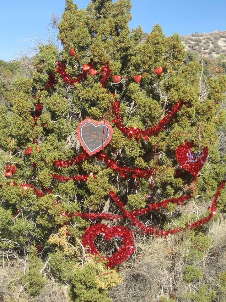 Up In The Mountains Above Laughlin Is Christmas Tree Pass The Early