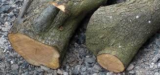 25 Best Ideas About Tree Identification On Pinterest