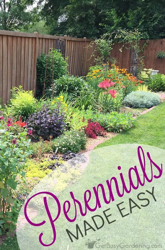 Perennials can make your garden look happy and full year round but there are some tips you need to know to grow them easily. Check out!