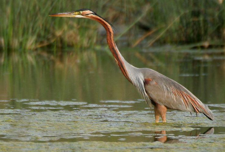 Планета Земля и Человек: Изменение климата меняет ареалы обитания птиц