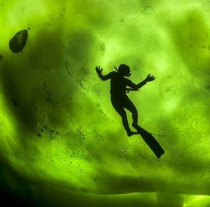 Image: A diver swims  beneath  sea ice in the Arctic Circle with the northern lights above (© George Karbus/Solent News/Rex Features)