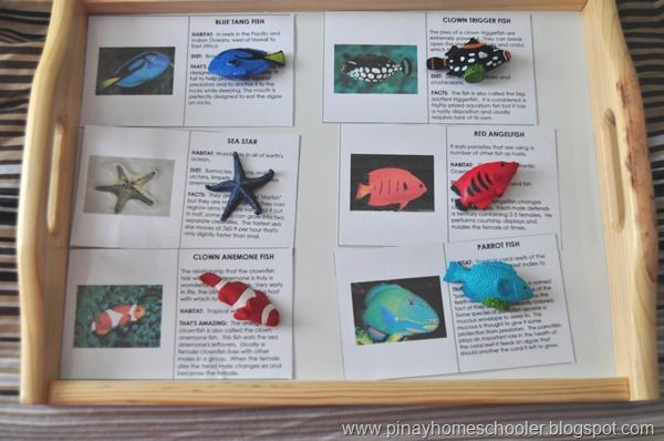 Coral Reef photo cards for matching with Safari Toob Coral Reef set