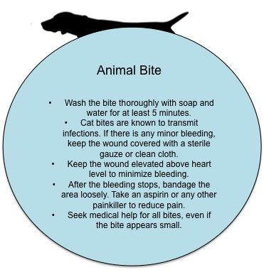 First Aid Tips: What to do in case of an animal bite