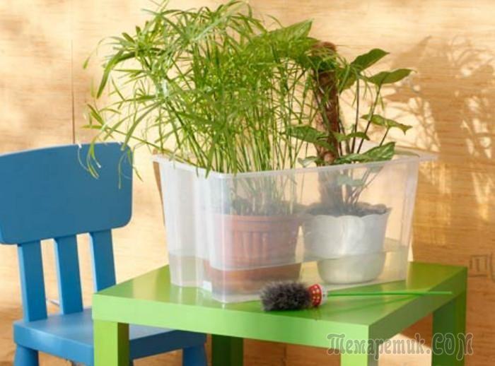 Новый взгляд на нижний полив растений
