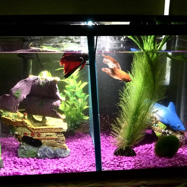 21 best board terrain images on pinterest aquarium for Divided fish tank