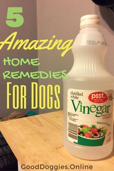 Check out these 5 amazing home remedies for dogs. Find a home remedy for dog stomach, diarrhea and even shedding.
