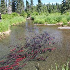 64 best fishing washington state images on pinterest for Salmon fishing season washington