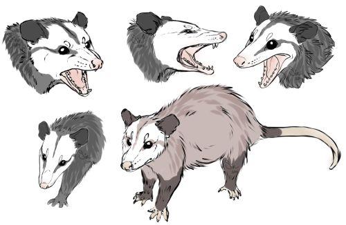 Pin by Virginia Ingram on Possum   Animal drawings, Cute ...