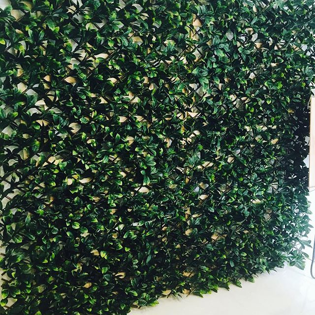 Hire our Greenery Wall $100 for 2x2m *up to 4m available