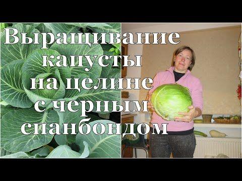 КАПУСТА на чёрном спанбонде. РАСТИМ на целине! / Cabbage on virgin soil with black spunbond - YouTube