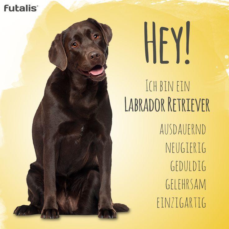 Eine Der Beliebtesten Hunderassen In Deutschland Der Labrador
