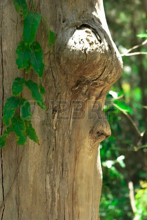 a face in the tree in the forest