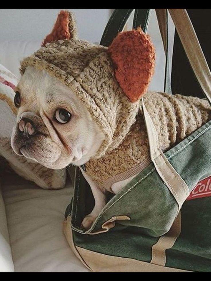 17 Best Ideas About Teddy Bear Dogs On Pinterest Bear