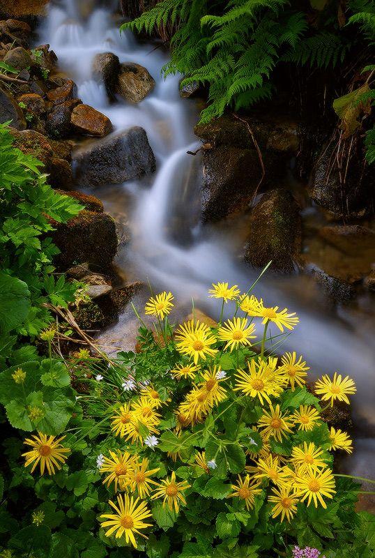 Фотография *** / Александр Котенко / Carpathian Mountains | Ukraine