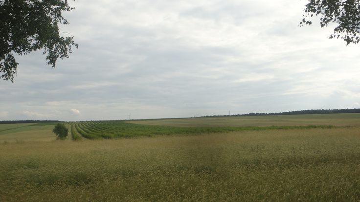 Łąki i pola w Nieznanowicach