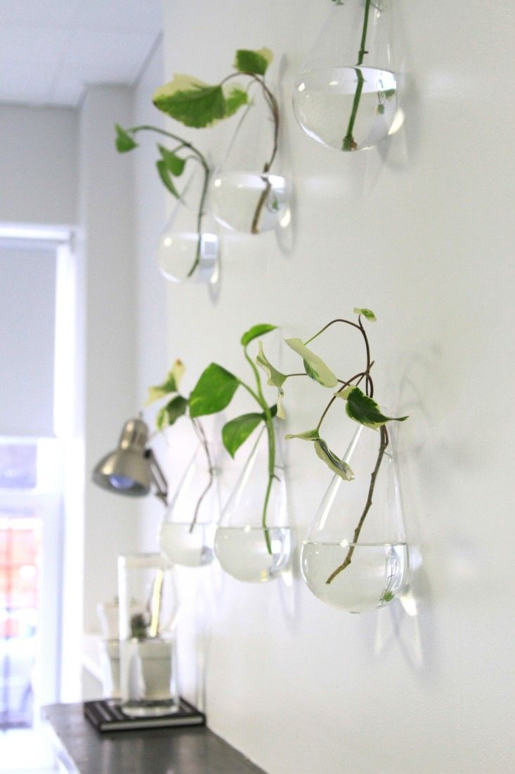 make your own living wall: lazy person's edition   gardenista